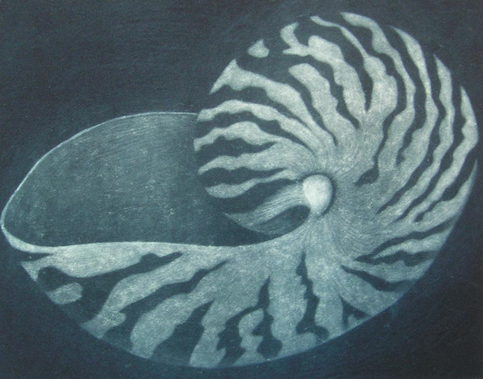 Chambered Nautilus by Patricia Sundgren Smith