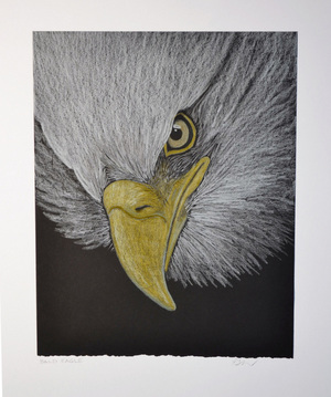 Bald Eagle by Patricia Sundgren Smith