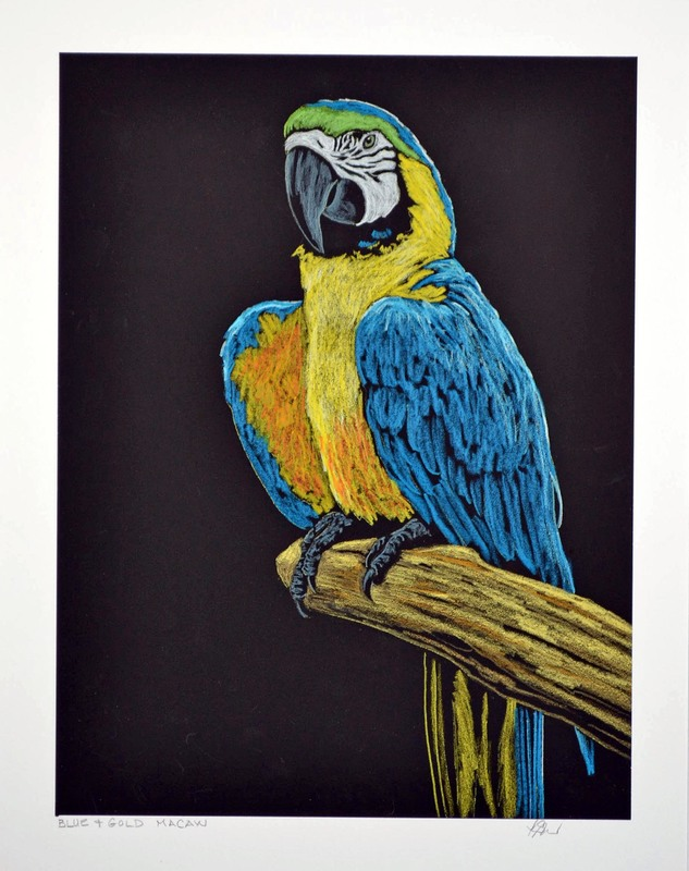 Blue and Gold Macaw by Patricia Sundgren Smith