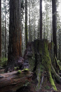 Redwood Park by Jim Lowry